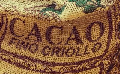 cacao criollo peru