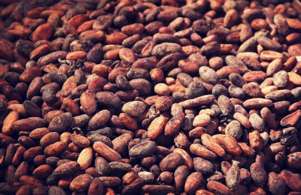 kakaobohnen bio superfoods